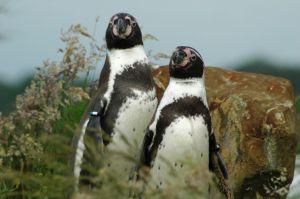 SEO po pingwinie – czyli jak żyć?